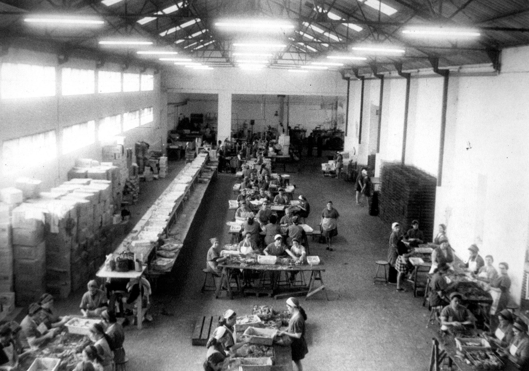 Fischfabrik vor 100 Jahren